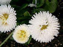 the northwest european pollen flora viii filetype pdf