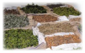 la pharmacopée marocaine traditionnelle pdf