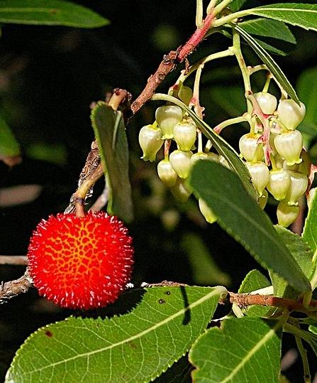 guide lebanese wild honey flowers