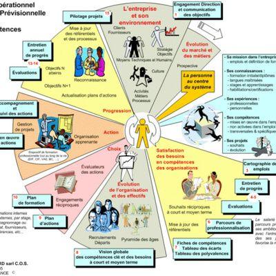 les hormones et leurs fonctions pdf