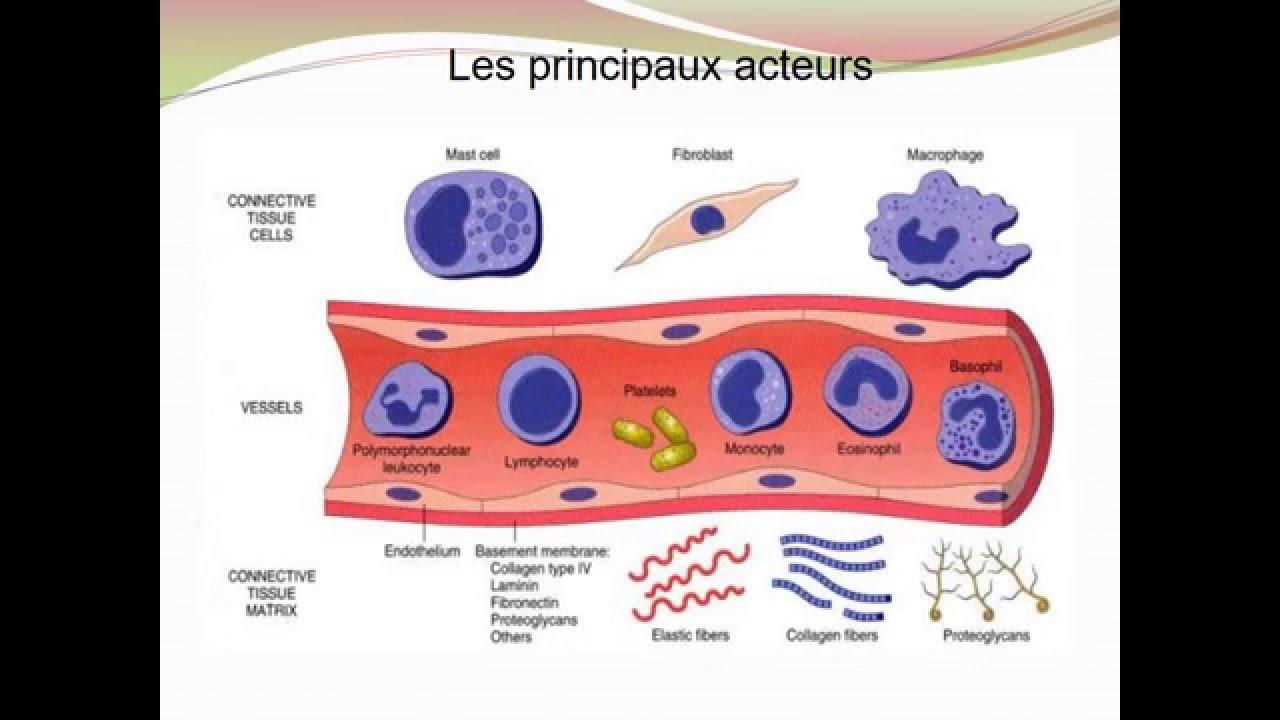 processus inflammatoire cours de medecine pdf